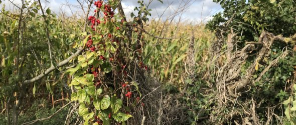 Hedgerows Oct 19